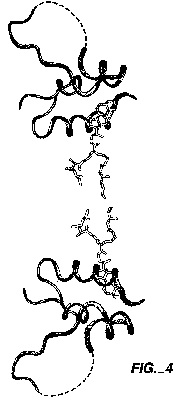 IGF-1 DES-1 – Influences of IGF-1 Levels in Circulation