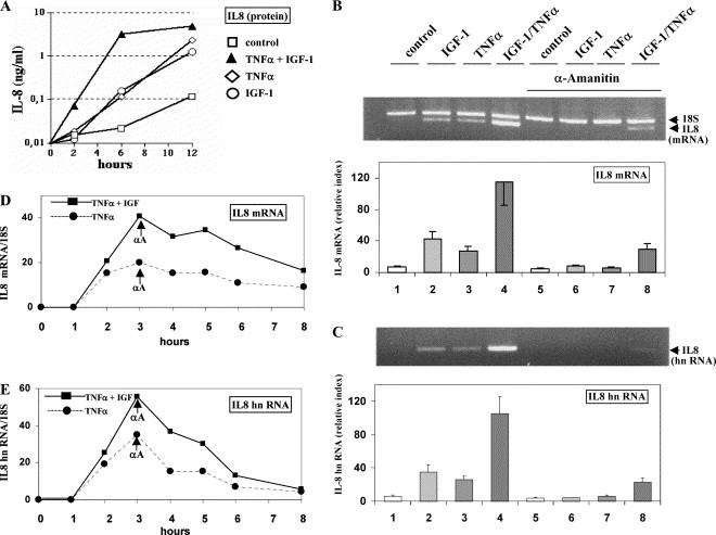 Igf-1 – Chemical Has Growth Factors